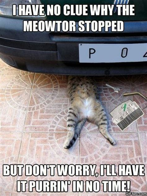 Car Repair Meme - meme auto repair cat