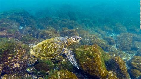 best places in the world for snorkeling snorkeling destinations 11 of the best places in the