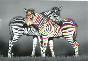 what color is a zebra gommap