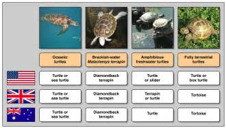 turtle names and colors turtles read biology ck 12 foundation