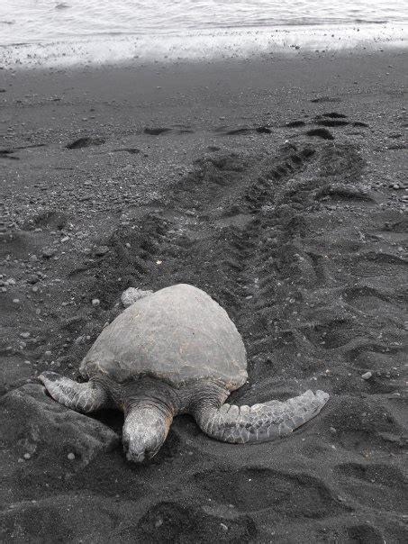 black sand beach big island wander wonder pinterest 11 best images about places ive been on pinterest