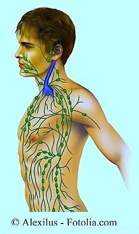 linfonodo testa linfonodi collo ingrossati e reattivi