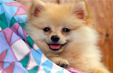 cute puppy dog wallpapers download cute puppies wallpaper download the free two cute puppies