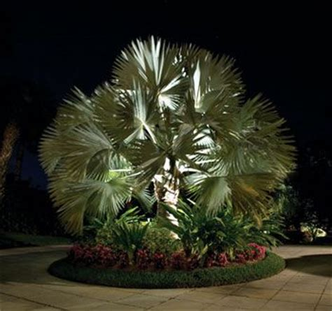 Landscape Lighting Palm Trees Palm Trees Landscaping Did You That Palm Tree Roots