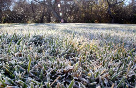 winter lawn care 3 mid winter lawn care tips r d lawn care and