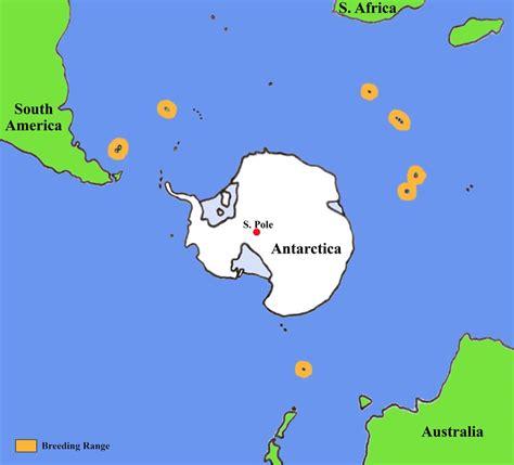 where do penguins live map king penguins