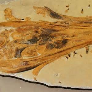 Fossil Broadcaster ichthyosaur fossil found in outback qld draws global