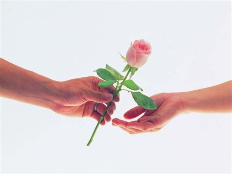 wallpaper flower rose love funny pictures gallery love roses wallpapers love rose