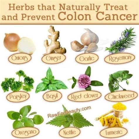 Colon Cancer Detox by 17 Best Ideas About Colon Health On Cleansing