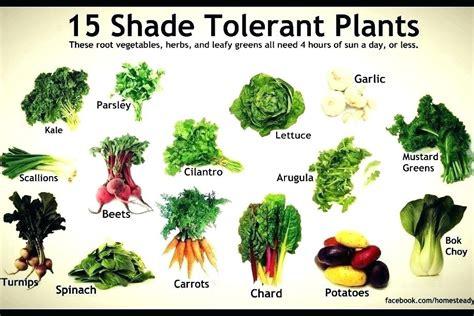 vegetable garden list garden list list of winter