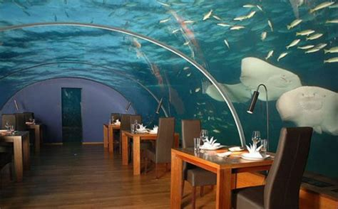 ithaa undersea restaurant prices ithaa underwater restaurant shelby white the of artist visual designer and