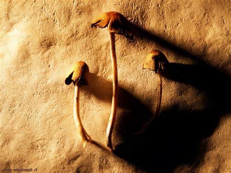 foto in foto natura artistica