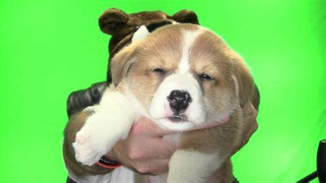 i got a puppy got a puppy d