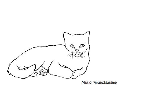 Outline Drawing Cat Laying Vitruvian Outline by Cat Laying Base By Munchymunchianime On Deviantart