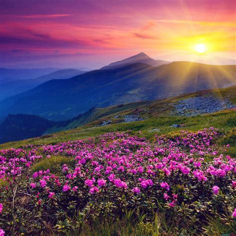 beautiful flower wallpaper zedge 早安励志问候语 每日早晨励志问候语 感人网