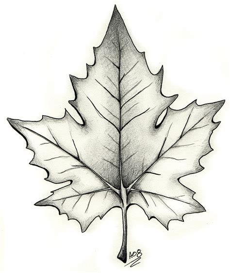 maple leaf tattoo designs 6 maple leaf designs and ideas
