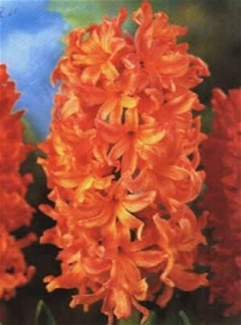 fiori di tutti i tipi tipi di fiori fiori di piante