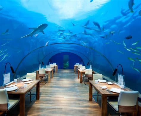 ithaa undersea restaurant conrad maldives rangali island select collection