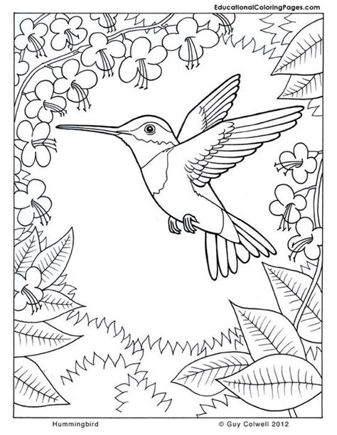 coloring pages with hummingbirds coloring pages coloring and hummingbirds on pinterest