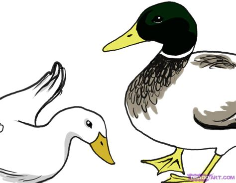 how to draw ducks simple duck drawing pictures to pin on pinsdaddy