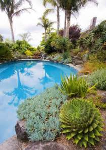 lush cacti succulents   poolside tropical pool