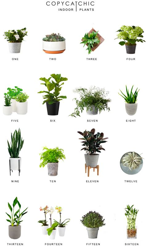 Pillows Ikea by Home Trends Indoor Plants Copy Cat Chic