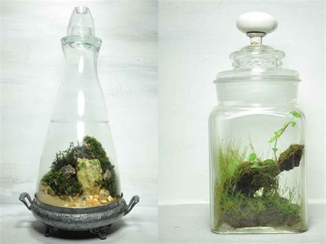 best plants for self contained terrarium the slug and squirrel terrarium 6 171 inhabitat green design innovation architecture green