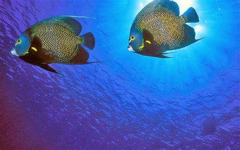 wallpaper laut cantik 20 wallpaper bawah laut terbaru bangiz