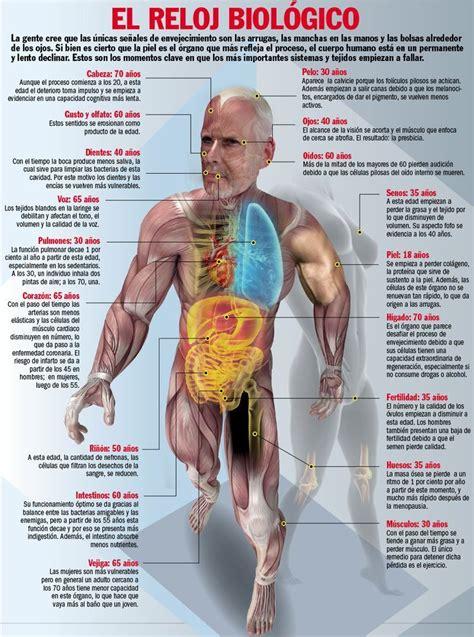 el cuerpo best 25 organos cuerpo humano ideas on