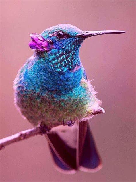colorful hummingbirds best 25 hummingbirds ideas on hummingbird
