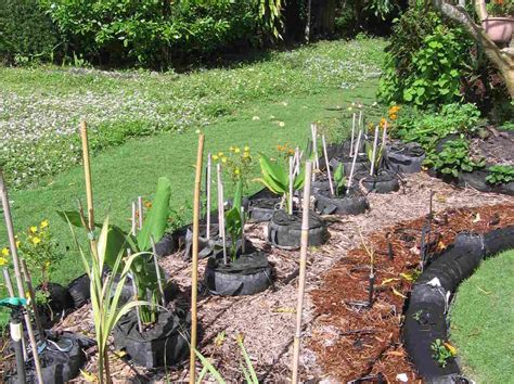 garden fruits and vegetables s a in florida a turf war blooms front yard vegetable