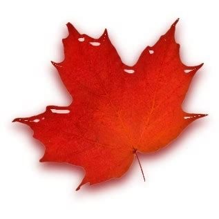 file canadian maple leaf jpg file stylized maple leaf jpg