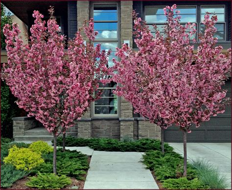 Vase Shaped Trees 1000 images about trees flowering on