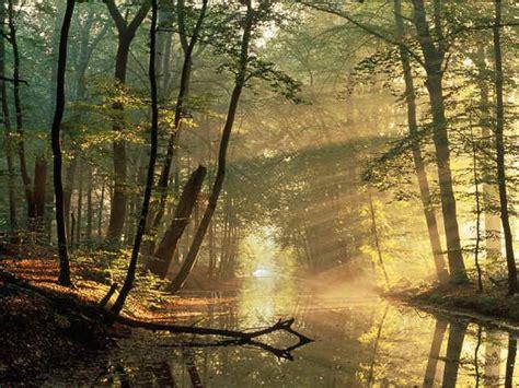 libro el bosque de los un bosque es un 225 rea con una alt
