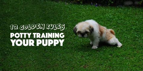 dog house training methods puppy potty training 12 golden tips to do it the right way