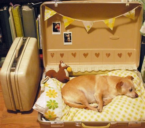 suitcase dog bed suitcase dog bed suitcase dog bed pinterest pets