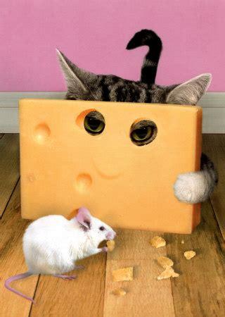 cheese the cat s meow the honolulu grub club blog
