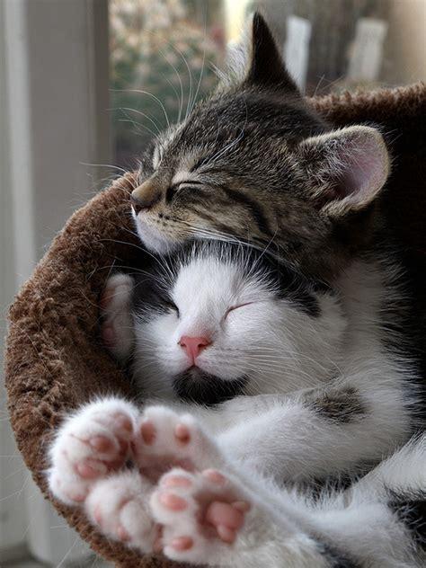 i love cats cute cat kitten pictures cute cat 11 different types of cute kitten hugs