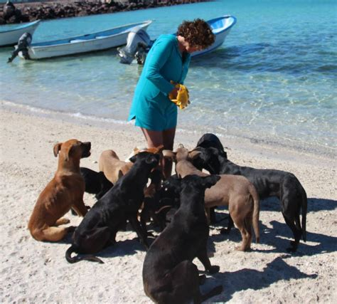 baja rescue vacationing rescues 34 dogs and cats