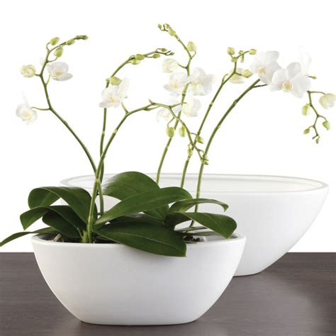 Wie Pflegt Orchideen Richtig 4793 by Tipps Zur Orchidee Pflege Wie 252 Berdauert Die Orchidee