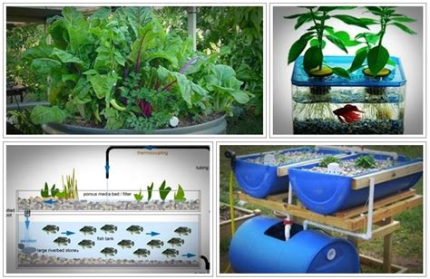 backyard aquaponics pdf easy diy aquaponics review reliable or not