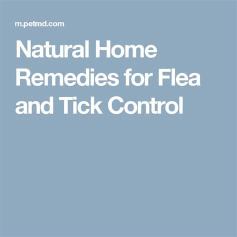 25 best ideas about ticks remedies on