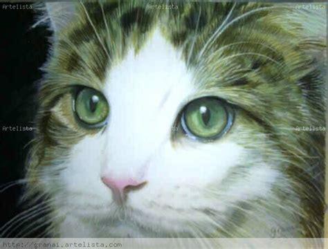 imagenes de ojos verdes de gatos fotos de gatos con ojos verdes imagui