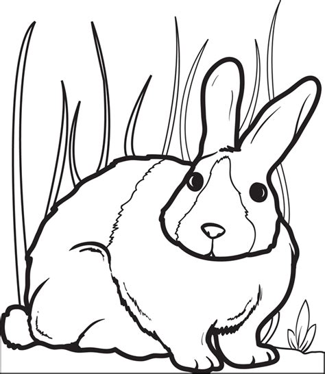 bunny rabbit coloring page  bunny coloring pages
