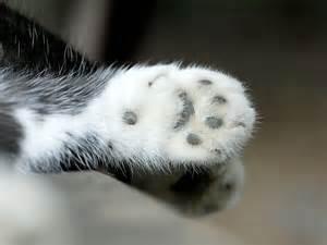 Scarica gratuitamente i nostri sfondi per il tuo desktop Gatti