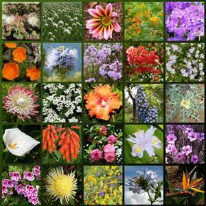 Tropical Rainforest Types Of Plants - file madeira flowers hg jpg wikimedia commons