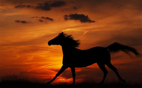 girly horse wallpaper horse full hd wallpaper and background image 1920x1200