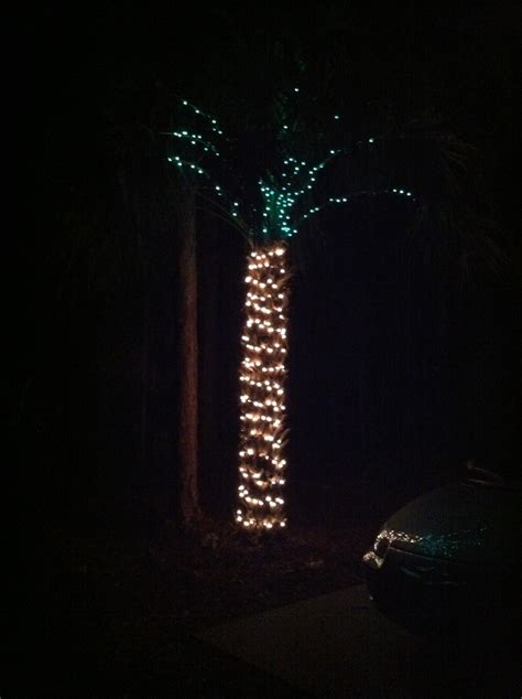 so this is why you don t put lights on a palm tree funny