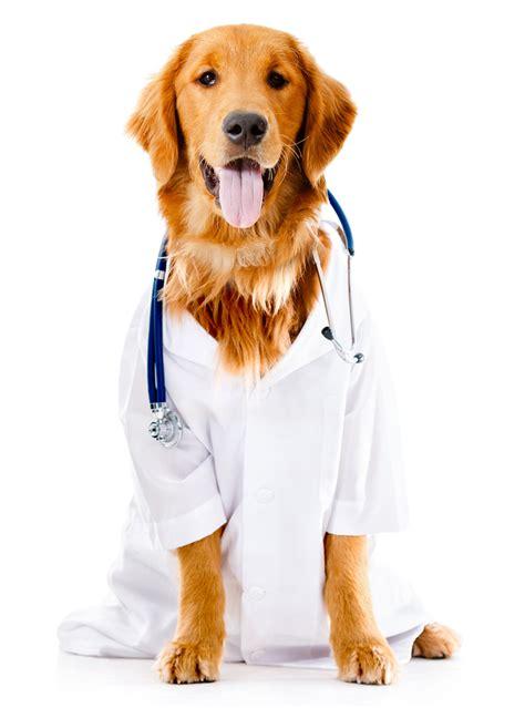 puppy vet pet health pet center fresno