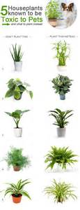 what plants are poisonous to dogs 5 houseplants that are toxic to pets and what you should